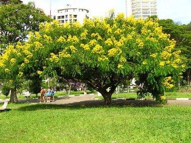 Plante informa es sobre o produto for Arboles que dan sombra para jardin